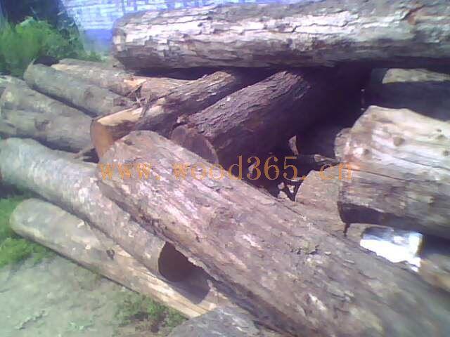 郓城启林木业有限公司大量出售核桃木,香椿树,黄杨木,水黄杨,枣木