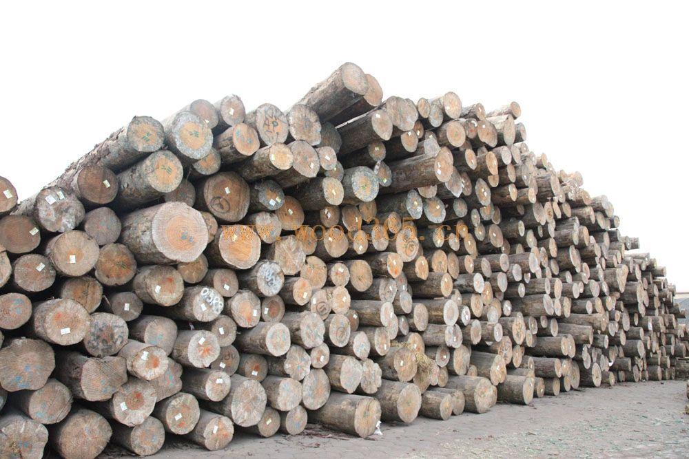 我公司专营新西兰进口各级别的辐射松原木.美国花旗松原木。辐射松木材质量为中密度、结构均匀、收缩效率平均、稳定性强的优质木材。完好的原木不存在腐朽、心腐和虫咬等问题;特点:木材握钉力好,渗透性强,极易防腐,干燥、固化和上色等处理。 辐射松木材的用途十分广泛,这也是其他针叶树种难以比拟的。 建房:辐射松是建造木房的好材料。分布在新西兰城乡漂亮舒适的住房,大多是用辐射松材建造,使用寿命可达百年以上。辐射松木材还可用于大型建筑,如新西兰国家林业研究所的主楼是辐射松材木结构建筑。 胶合板、纤维板、刨花板、单板、建筑