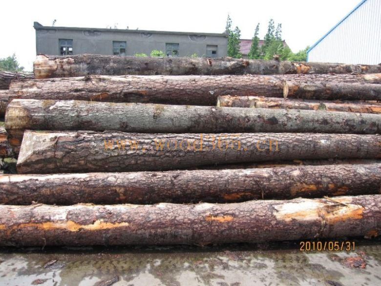 欧洲松木原木