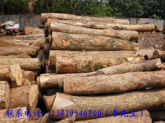 供应香樟木原木,板材,树根,等 电话13879546700 李-新