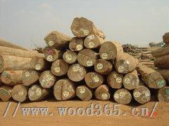 缅甸花梨进口报关代理香花梨木材进口清关缅甸红木进口通关公司