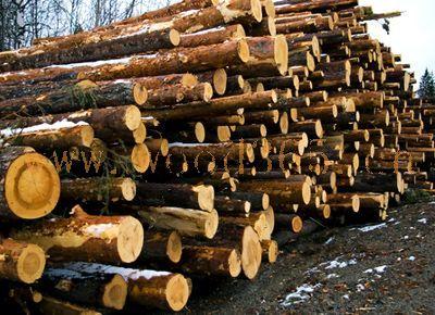 松木方木料供应
