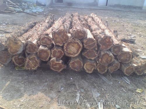 求购全国各地的香椿木原木 柏木原木 刺槐原木