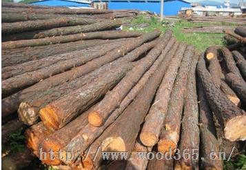 河道驳岸杉木桩4米大头20公分
