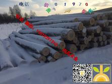 供应俄罗斯桦木原木货到满洲里