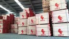 供应欧洲进口榉木板材货源充足-东莞丰之林木业有限