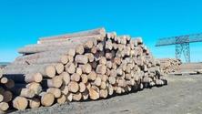 进口板材原木板材加工木材批发-安泰木业有限公司