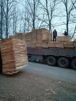 杨木单板厂