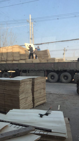 三拼杨木单板杨木板皮杨木皮子