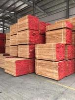 专业欧洲榉木供应商