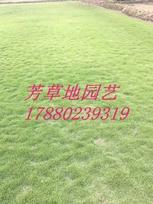 贵州绿化草皮房建草皮重庆人工草皮种植基地