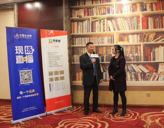 中国木业网专访平安树崔董