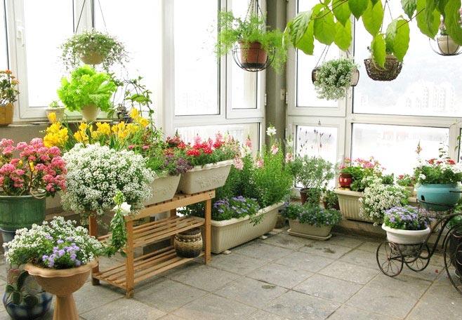 小花园图片 11个阳台花园装修效果图