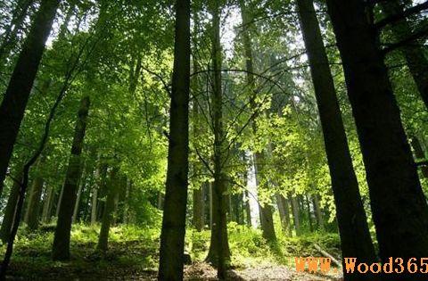 壁纸 风景 森林 植物 桌面 480_315