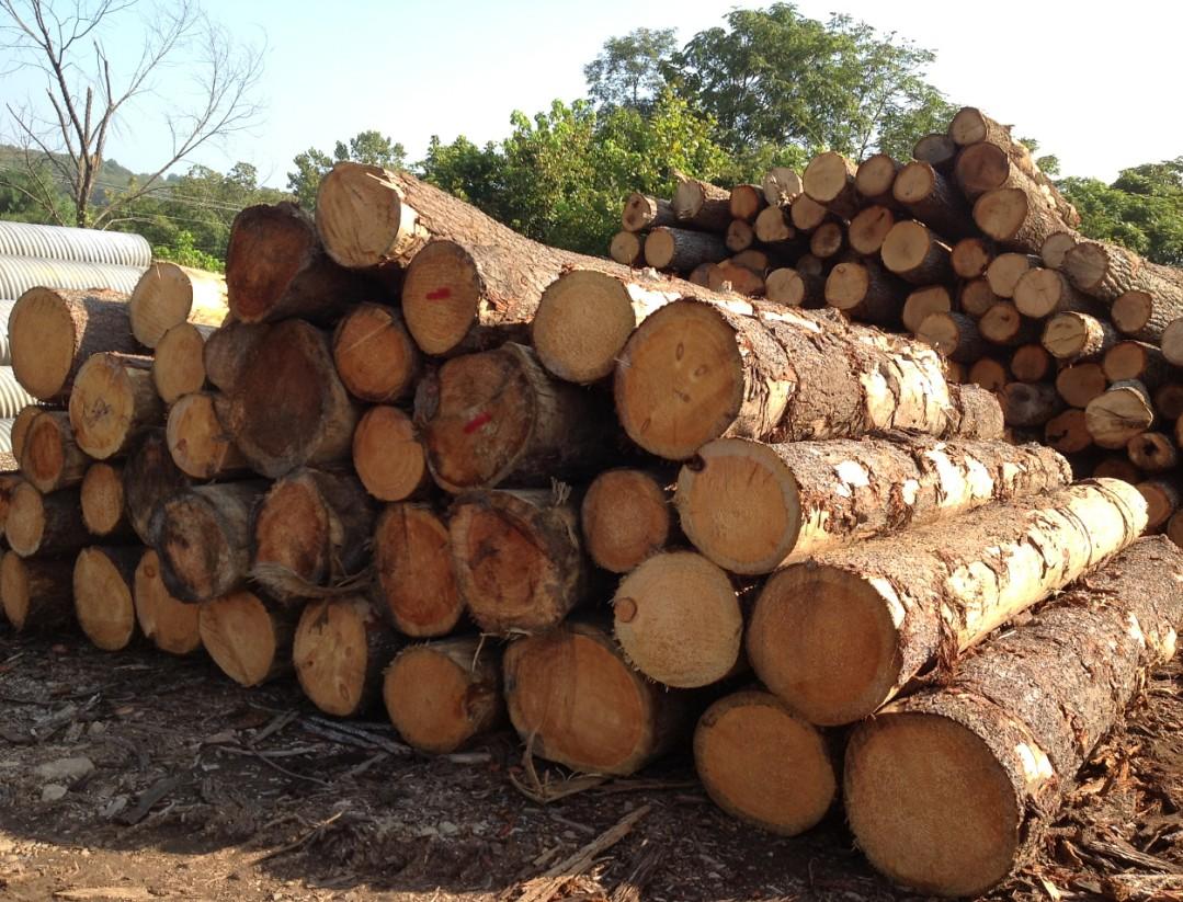 世界上最珍贵的木材