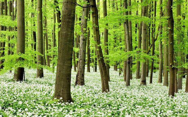 壁纸 风景 森林 桌面 600_375