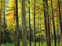 環保為先 蘇醒板材廣受市場認可