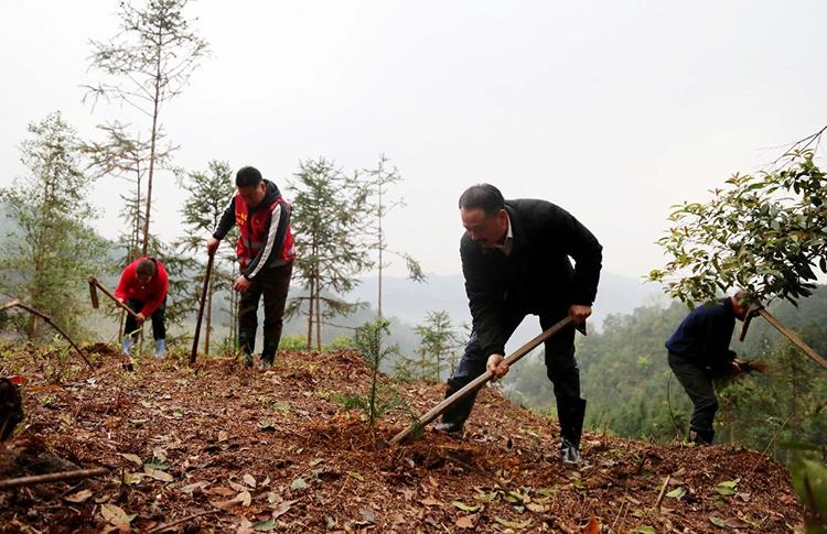 十大生态板壮象捐赠树苗助力乡村振兴!