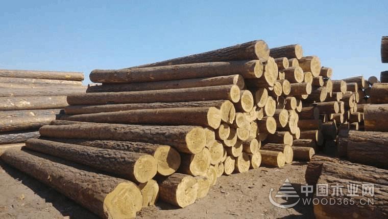 江西美隆:木材的护卫者,企业的安全官