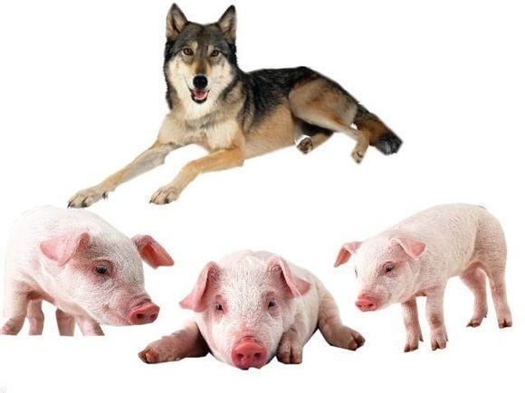 猪和狼之间的区别在哪里?