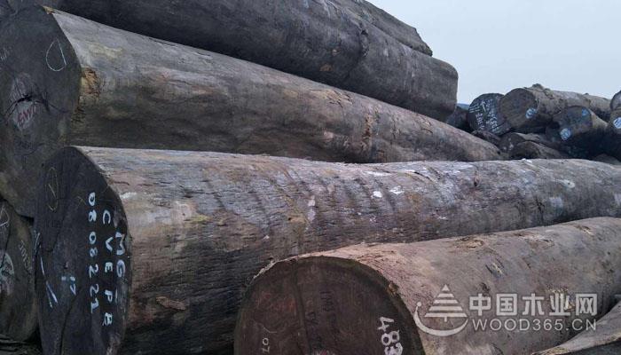 摘亚木木材用途和特征