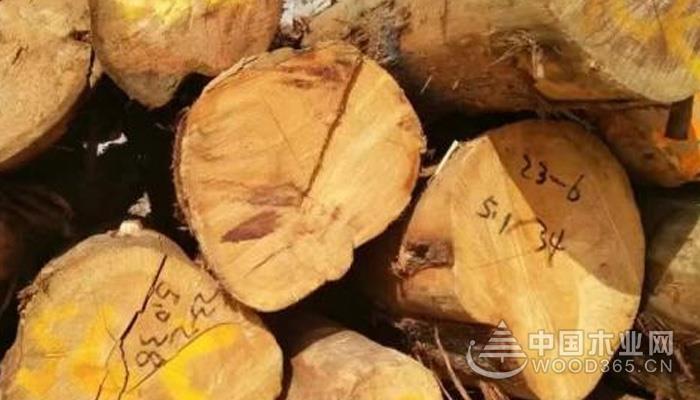 什么是油柏木?油柏木的特点有哪些?