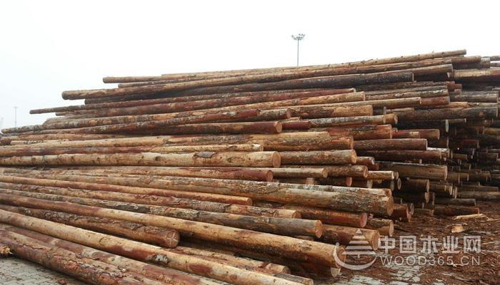 花旗松木材为什么比樟子松价格便宜