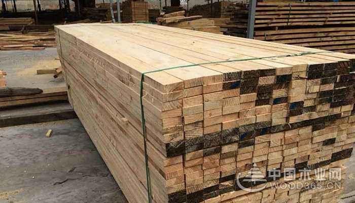 铁杉木材知识