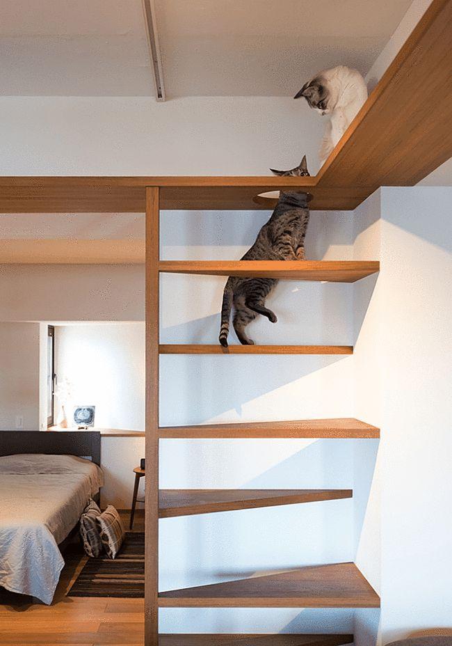 73㎡原色日式小宅,一人两猫的生活