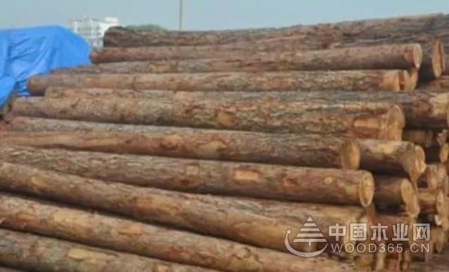 2019年上半年美国西部针叶木锯材产量减少2.4%