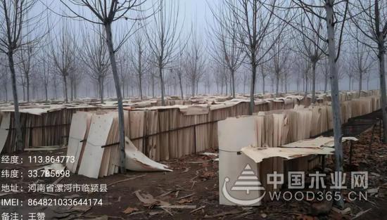 漯河市临颍县大量木材加工企业长期违法违规生产