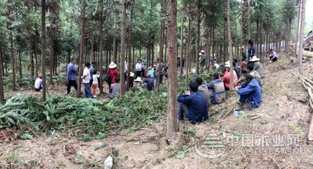 昌宁县鸡飞林场木材战略储备基地建设项目开工