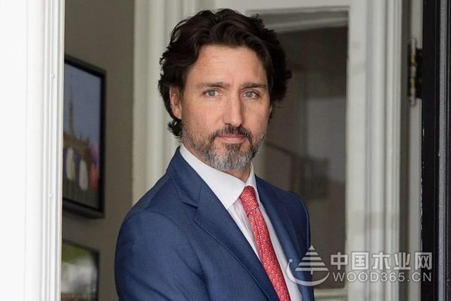 """加拿大出口我国木材""""再次""""检测出害虫,中方敦促加方尽快调查"""