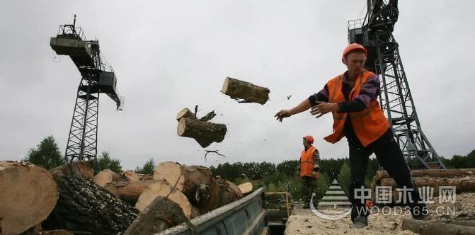 2022年起俄罗斯将禁止出口针叶原木或粗加工木材