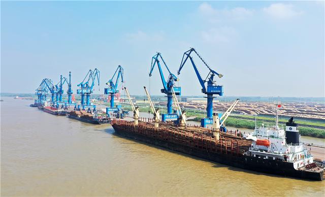 再创新高 新民洲港2020年进口木材近370万立方米