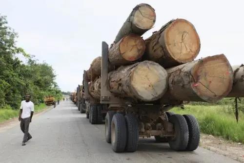 加蓬政府计划重启尼扬加省大马永巴木材加工产业基地建设