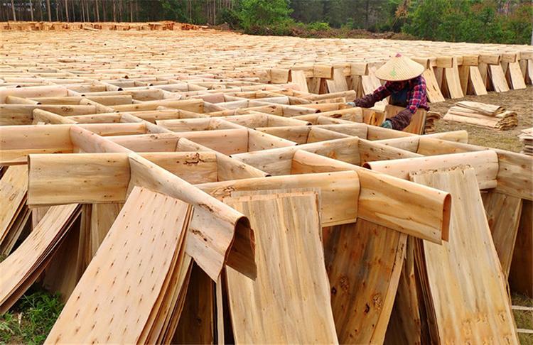 广西农行防城港分行助力木材加工产业发展