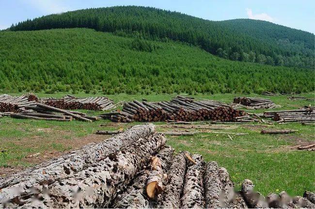 2020年,广西林业产业总产值超7500亿元