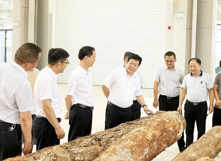 湖南省人民政府参事一行调研中非经贸产业园木材加工项目