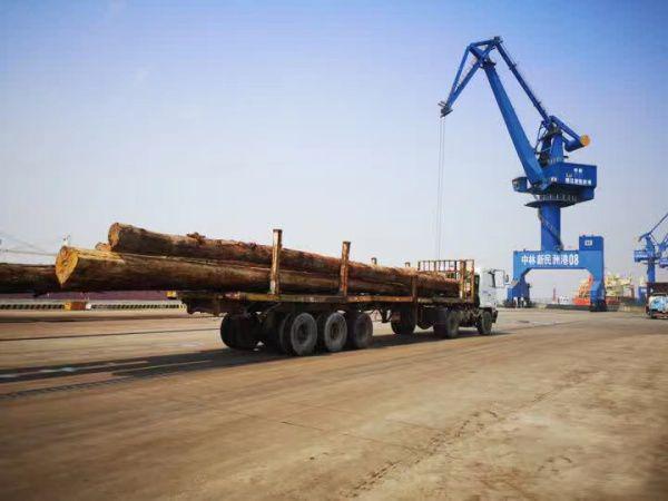 2020年新民洲港木材进口量365.5万立方米