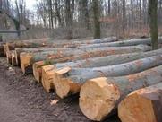 甘巴豆属于什么木材?甘巴豆木材有什么性质?