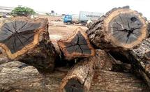 黑檀木与白象牙两种木材的差别