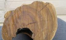 檀香木多少钱一斤?非洲檀香木家具价格贵吗?