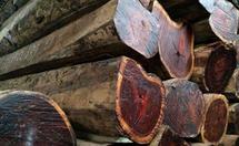 大果紫有一�N天然檀木材特性知识