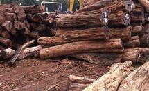 东非黑黄檀木材特性详解