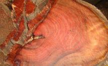 小叶红豆分布和紫檀木的区别