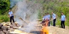 桃源县<font color=#FF0000>林业</font>局集中烧毁20余立方松材线虫疫木