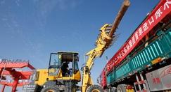 中欧班列推动甘肃成为中俄木材贸易投资的新热土