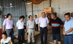 广西贵港市政协副主席到东龙镇调研木业加工产业