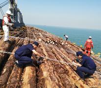 曹妃甸建成华北最大木材专业码头